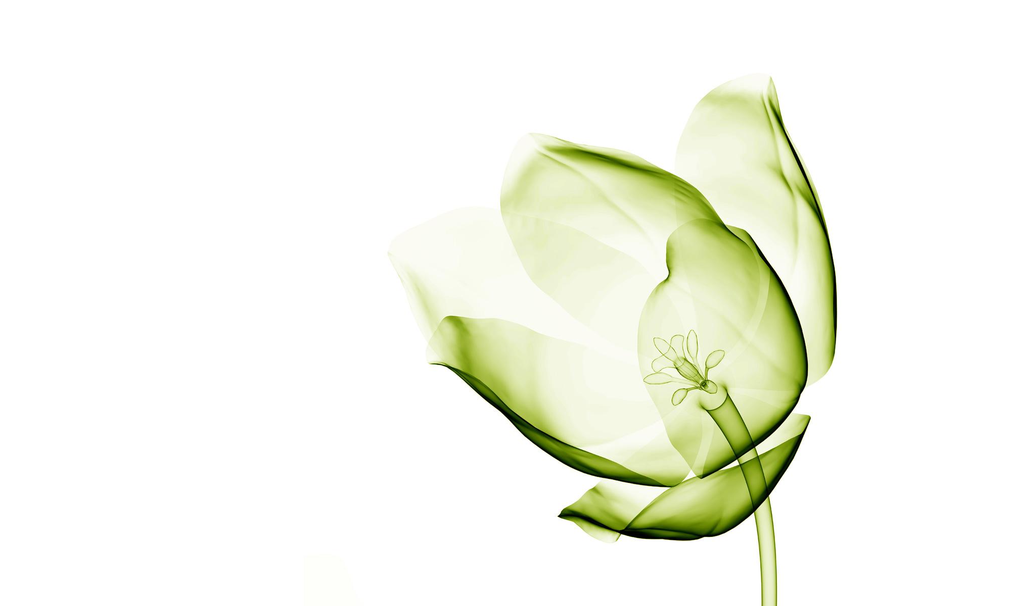 Lively Green | Strategic Design Consultancy